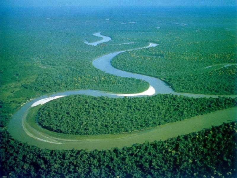 Деревья во влажных тропических лесах